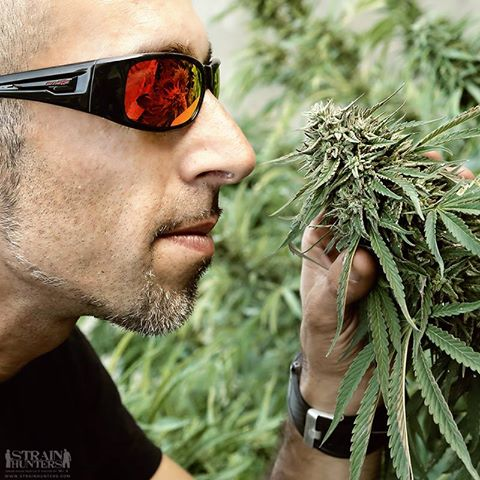 RIP Franco Loja – True Cannabis Legend