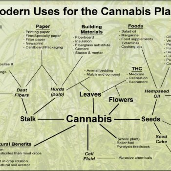 Modern Uses of the Cannabis Plant