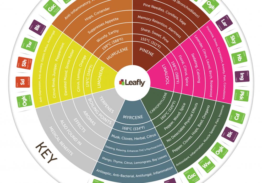 Cannabis Terpene Wheel Infographic