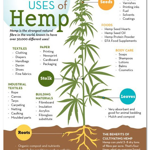 many-uses-of-Hemp-Infographic